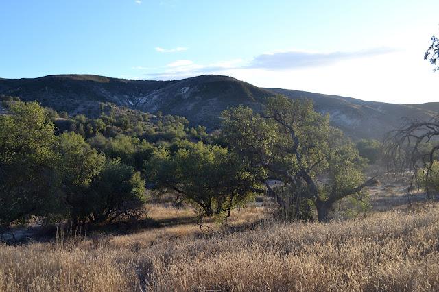 oaks climbing hills