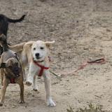 Puppy Fun - Quinta Life