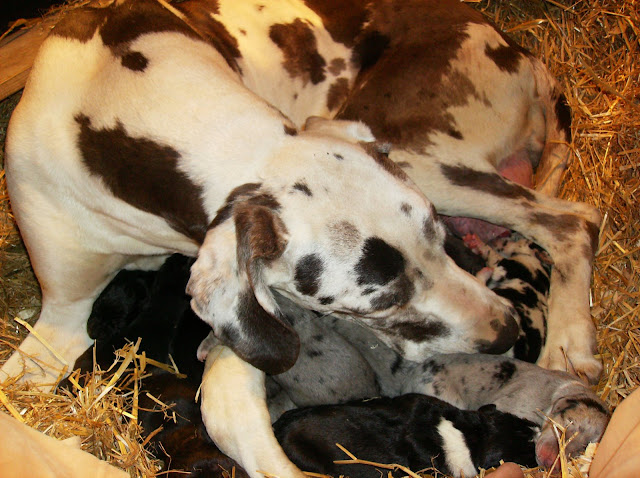 Thelma & babies-2nd day