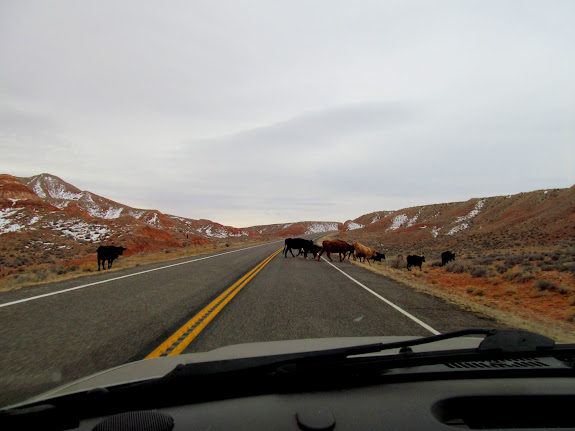 Cows crossing UT-95