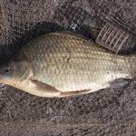 20150704_Fishing_Virlia_022.jpg