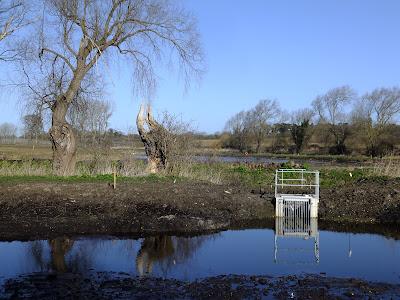Aldehurst Nature Reserve taking shape