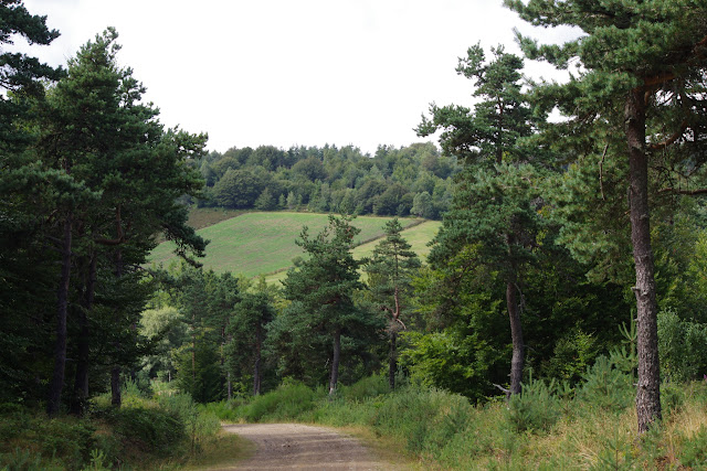 Paulhac-en-Margeride, 1250 m (Lozère), 19 août 2013. Photo : J.-M. Gayman