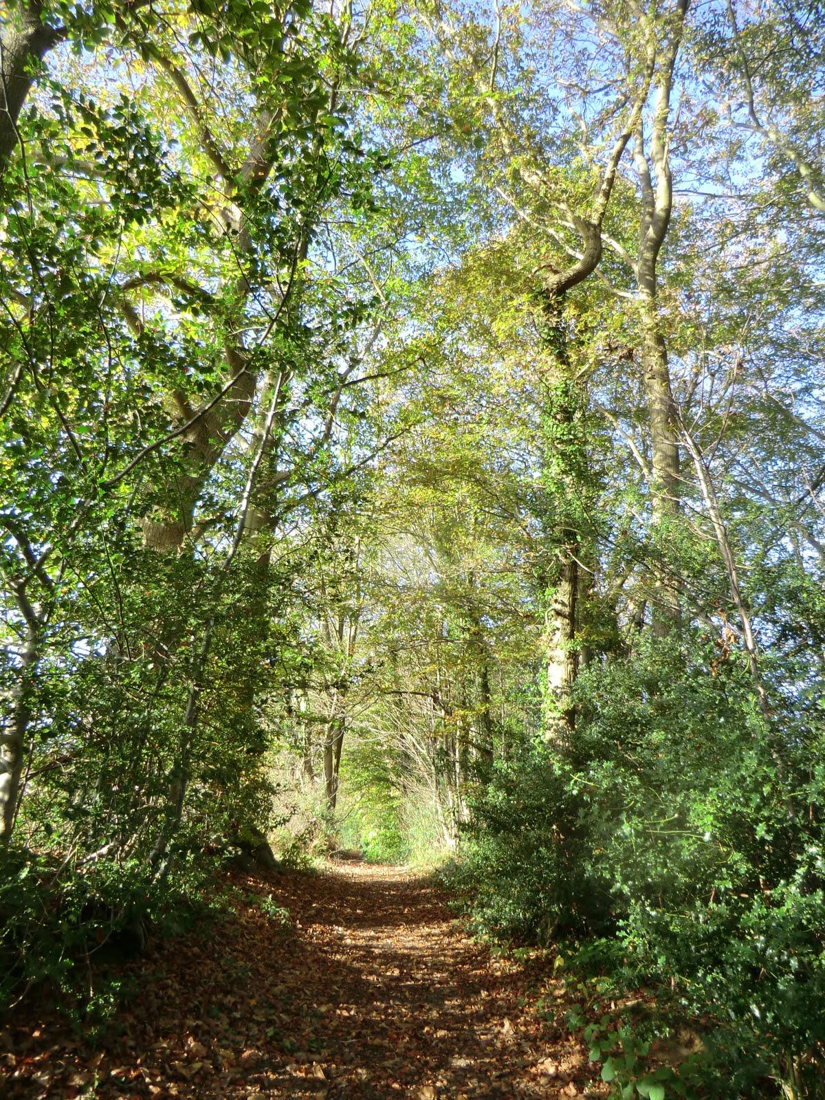 CIMG5608 Through Burrs Wood