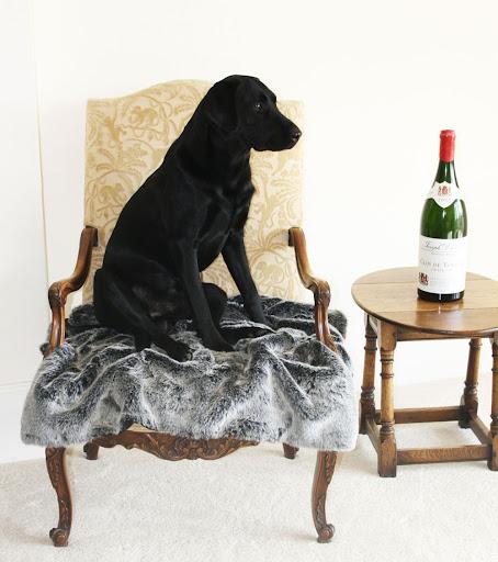 top 10 family dogs labrador