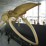 2010_05_22_Blue_Whale_Biodiversity_Museum