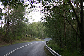 On the scenic road through Mt Coot-tha