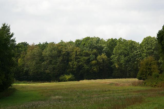 Pré en lisière de la Forêt domaniale de Dreux ; biotope de Polyommatus icarus, Colias croceus, Pieris rapae, Vanessa cardui. Les hautes-Lisières, 12 septembre 2009. Photo : J.-M. Gayman