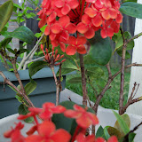 Gardening 2012 - 115_1582.JPG
