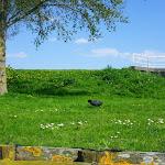 269-Aan de Zoolsloot vinden we een prachtig uitstapplaatsje...