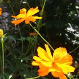 Gardening 2012 - IMG_3804.JPG