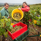 2013 vendanges du chardonnay - 2013%2B09%2B28%2BGuimbelot%2Bvendanges%2Bdu%2BChardonnay%2B116.jpg
