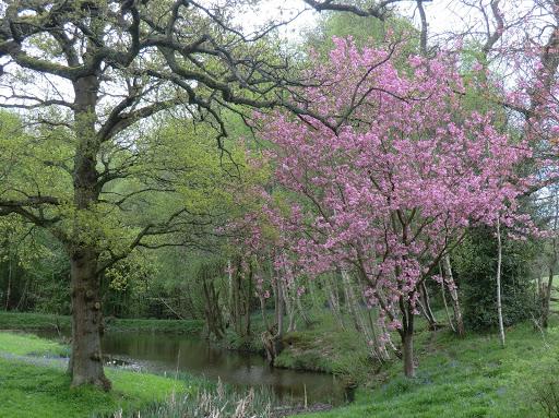 CIMG6361 Near Crippenden Manor