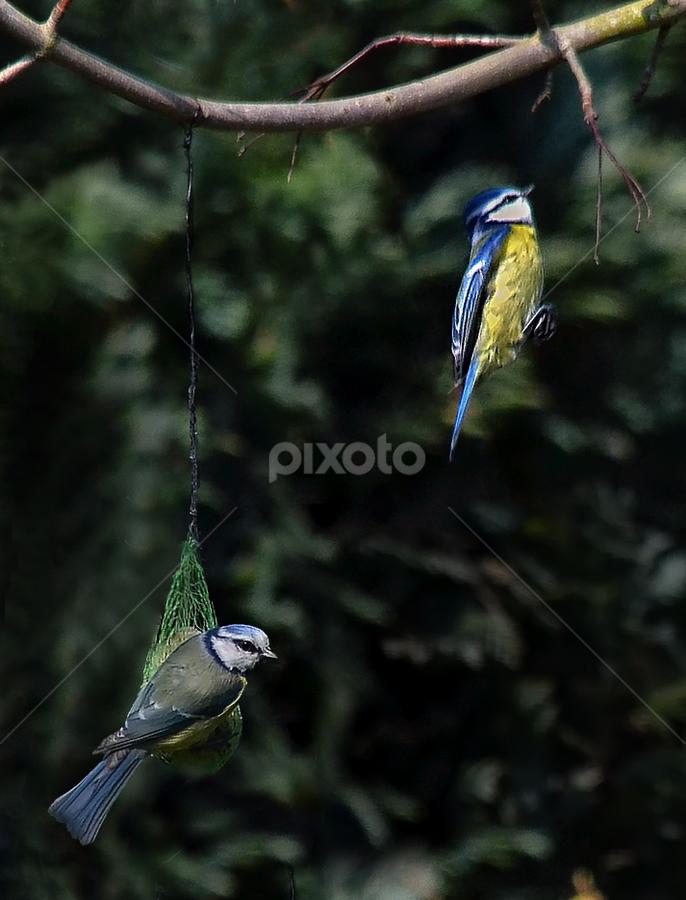 back to the branch by Ghislain Vancampenhoudt - Animals Birds