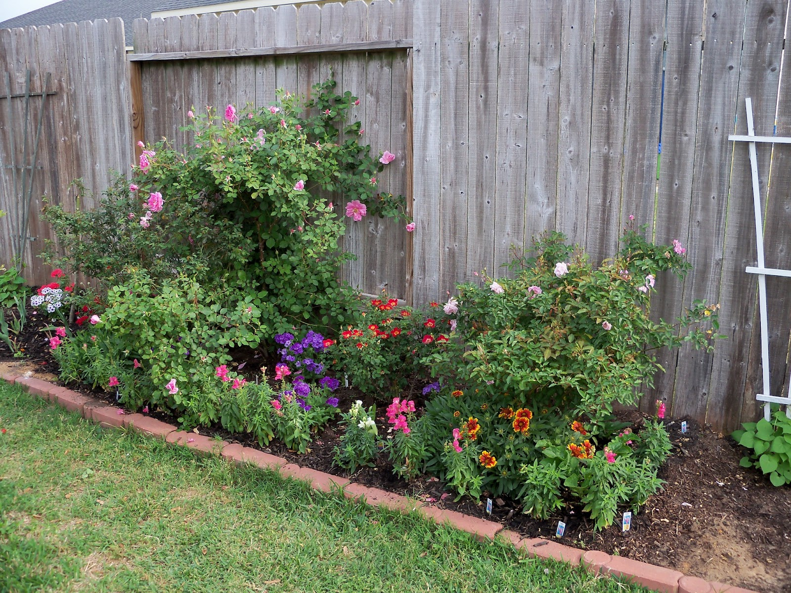 Gardening 2011 - 100_7131.JPG
