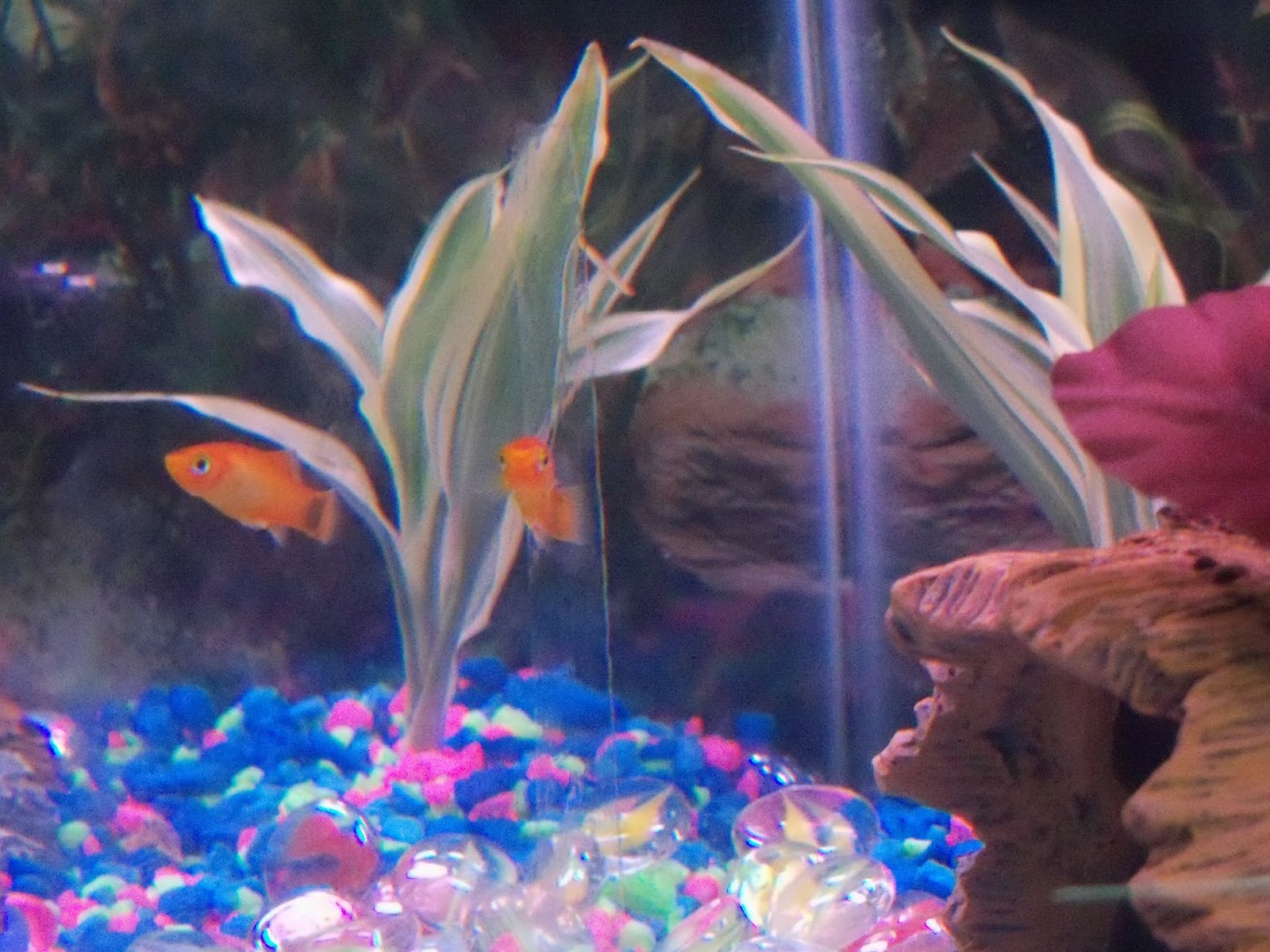 Fish - 100_6535.JPG