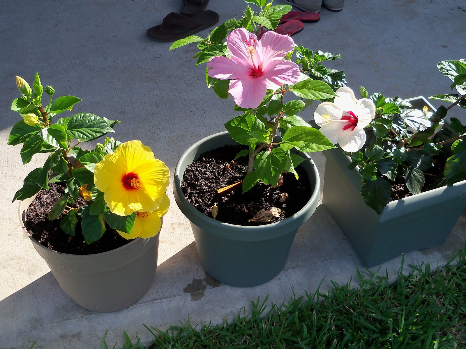 Gardening 2010, Part Two - 101_2511.JPG