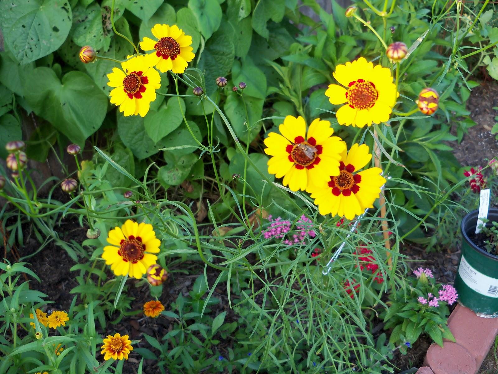 Gardening 2010, Part Three - 101_3655.JPG