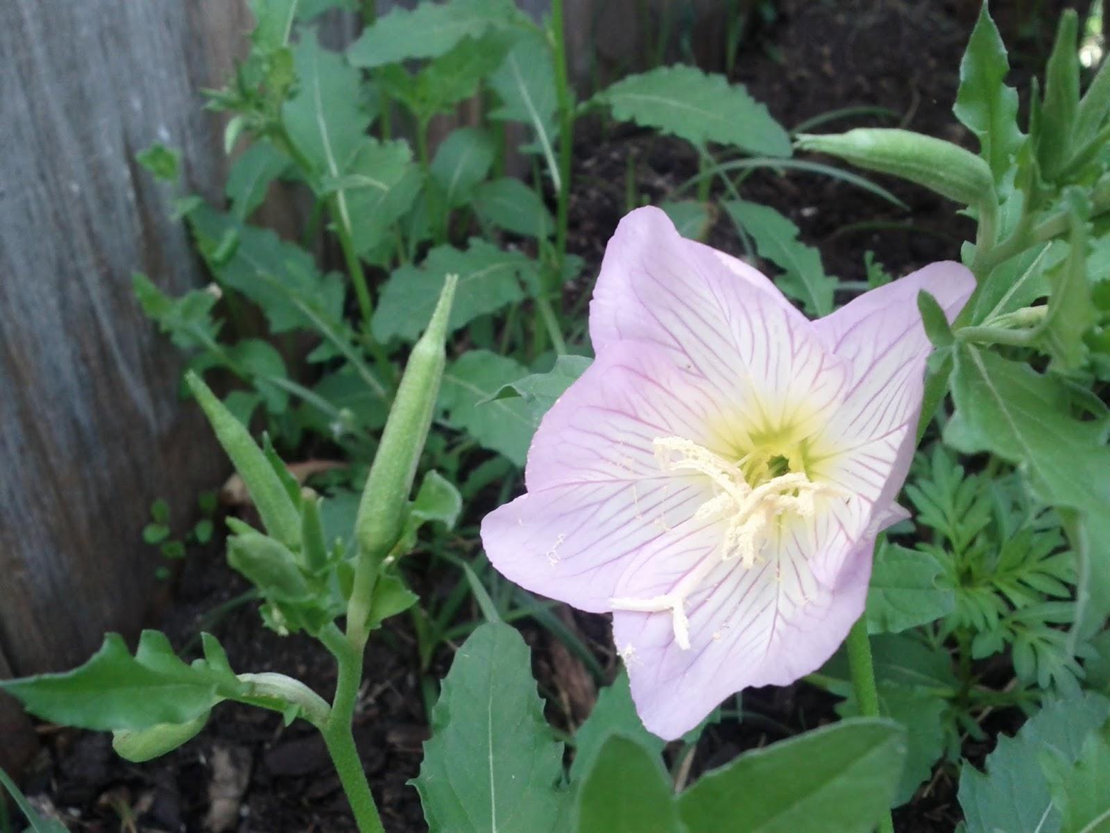 Gardening 2013 - IMG_20130324_092513.jpg