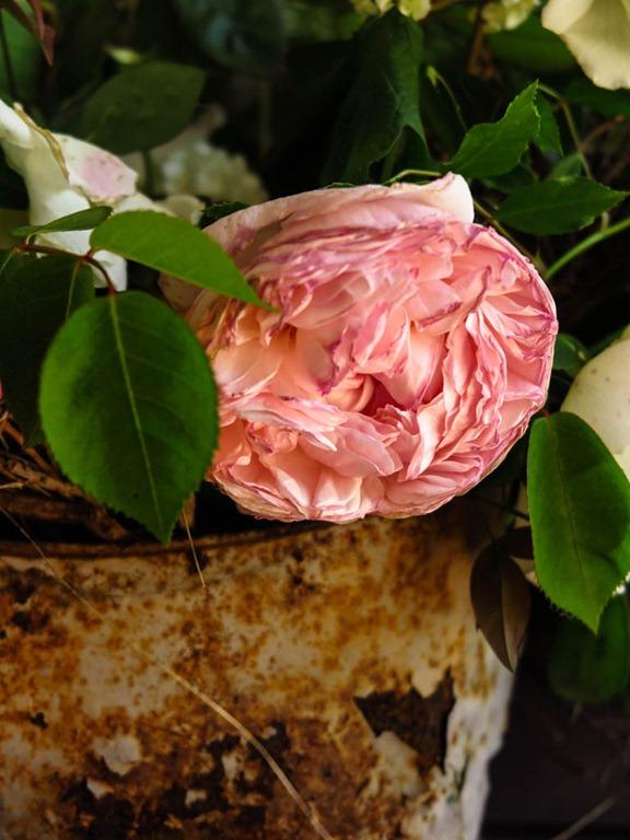 Slow Flowers Italy-21