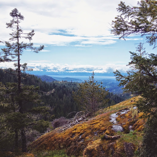 Wet moss covered terrain to a view. To Peden Lake and Beyond: A Photoadventure