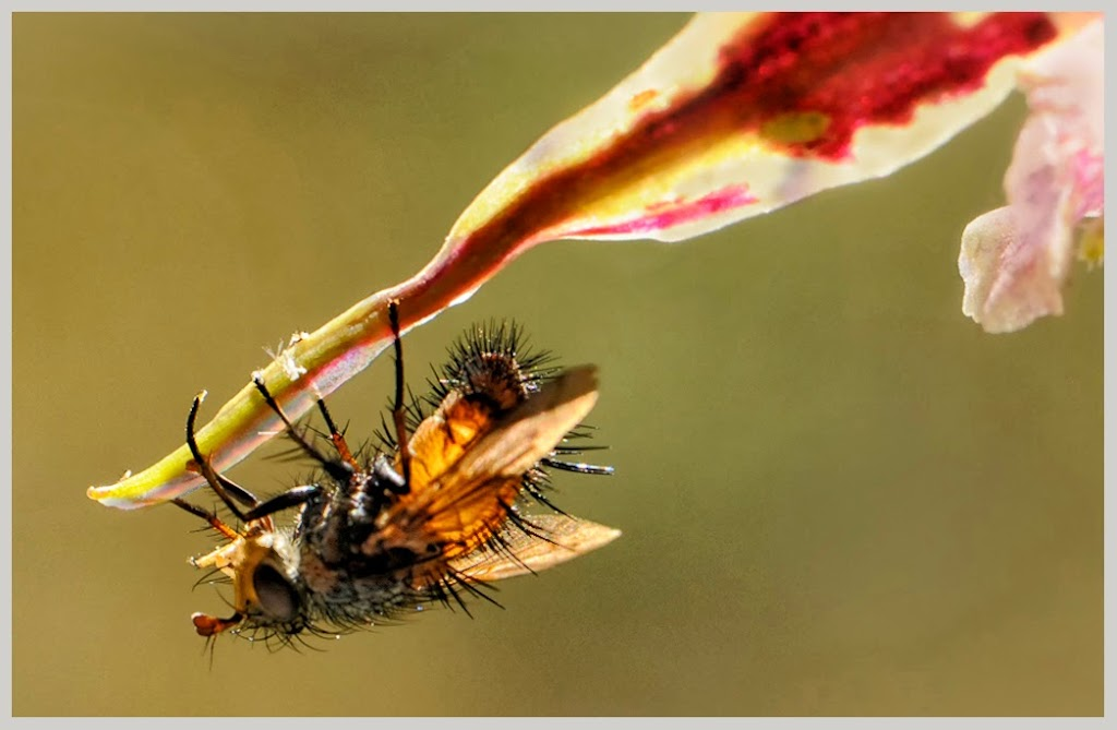 """""""Bug"""" by Ardythe Wendt-- 2nd --Place A General"""