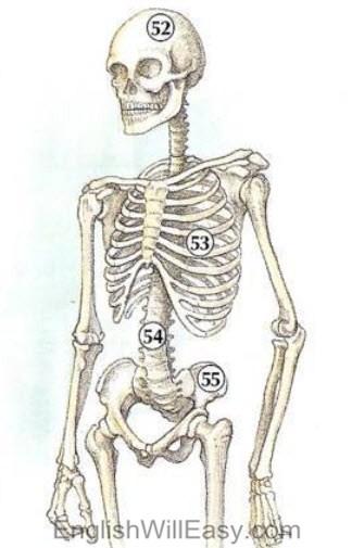 Vocabwilleasy: Human Body