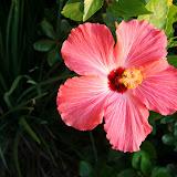 Gardening 2012 - IMG_2695.JPG