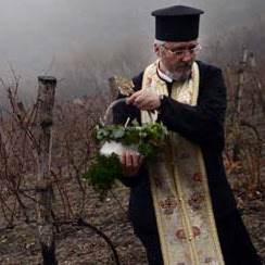 A priest blesses a Bulgarian vineyard
