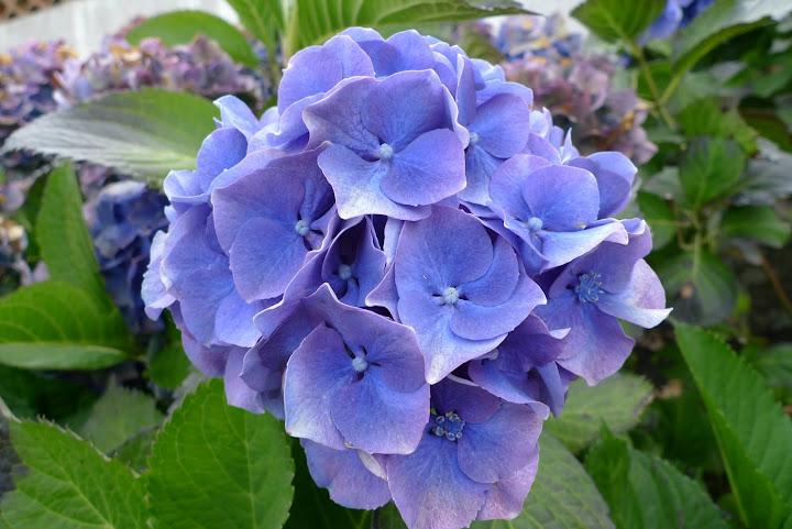 kwiatek nr 10