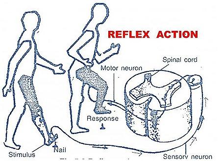 reflex-action