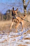 Huisdierfotografie - Huisdierreportage Hond (5 februari 2012) - 2