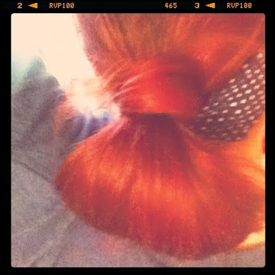 Quick Pin up Hairstyle Hair Wrapped Half Pony Tail