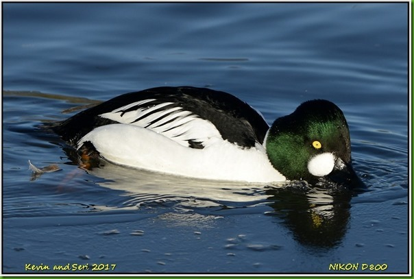 Slimbridge WWT - January