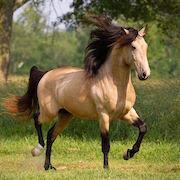 к чему снится лошадь женщине?