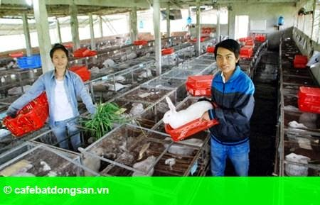 Hình 2: Công tử 9x nuôi thỏ thu tiền tỷ