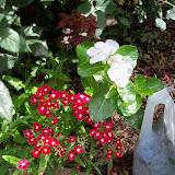 Gardening 2010, Part Three - 101_3811.JPG