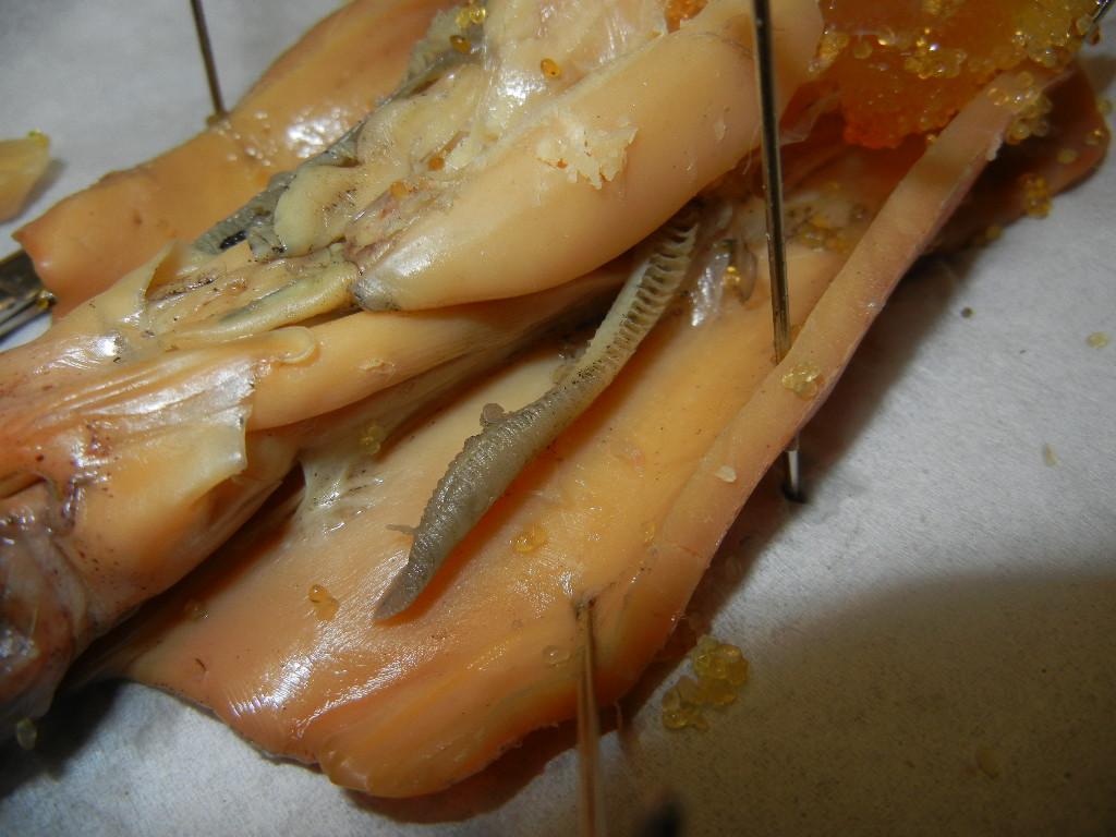 Squid Gill 01