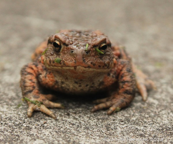 Toad-2