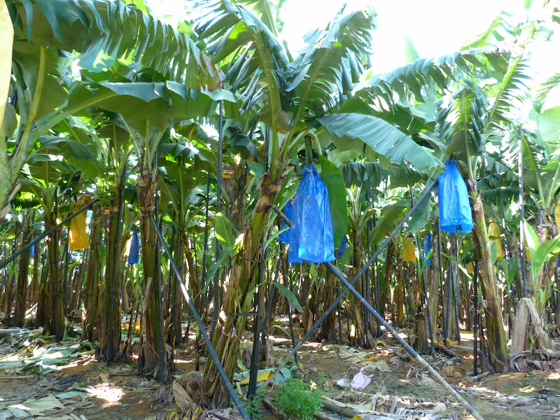 Puli  en passant , entre autres, par les villages de l ethnie Bunum de Loloko et Dili. J 10 - P1160735.JPG