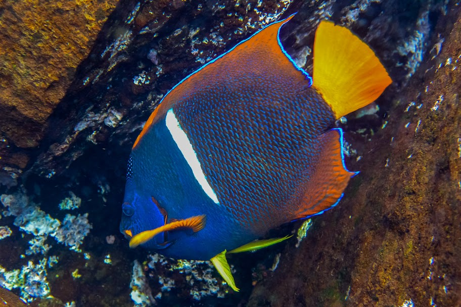 galapagos - Galapagos_FB_2-59.jpg