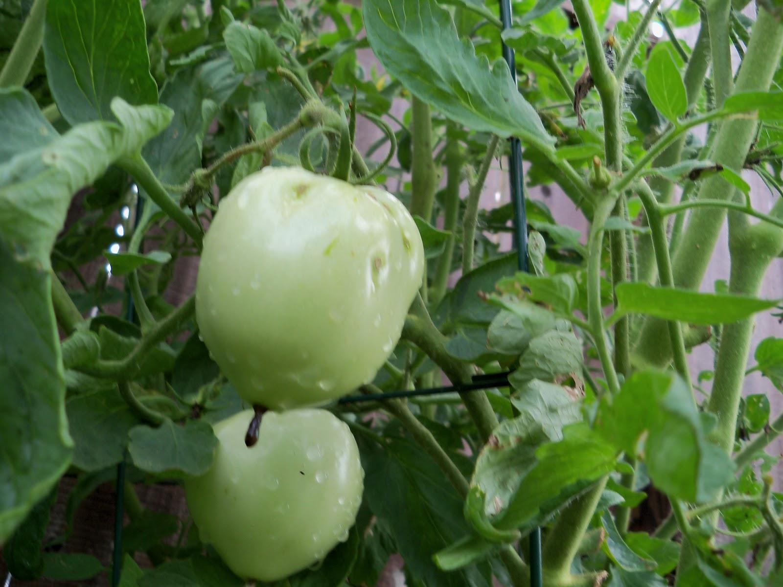 Gardening 2010, Part Three - 101_4732.JPG