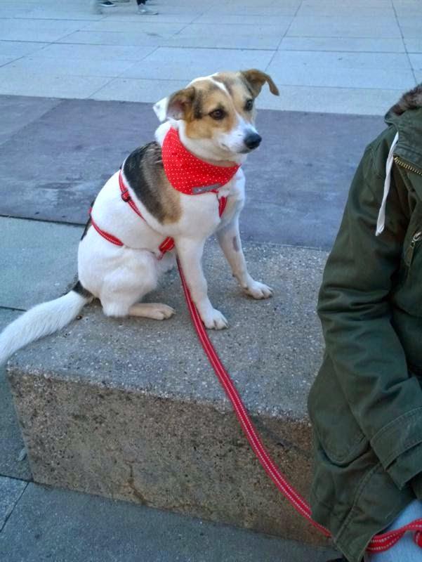 2015-04-07 Hundeschule Immenreuth On Tour in Marktredwitz im Auenpark - Marktredwitz%2B%252815%2529.jpg