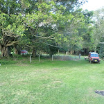 Open grassy area to camp at Melaleuca camping ground