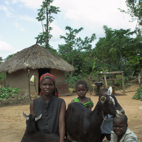 Bunyole Goat Farmers / Chritina Nagudi