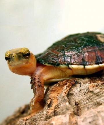 [badass-turtle8]