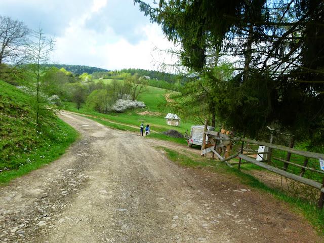 Zajęcia terenowe Źródliska Wisłoki - P1120873.JPG