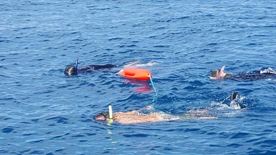 ハワイ島で水泳