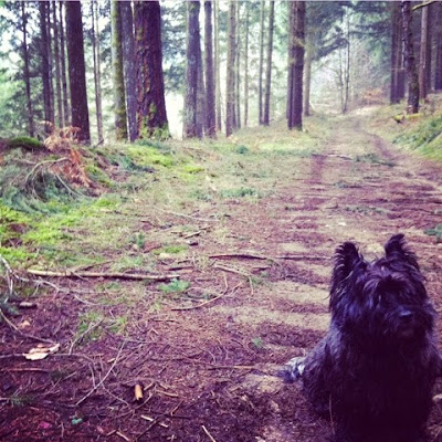 forests, february, winter, creuse, Limousin, nature,  France, cairn terrier, dogs,