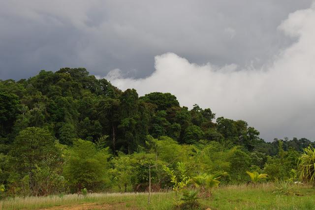 Avant l'orage. Carbets de Coralie (Crique Yaoni), 31 octobre 2012. Photo : J.-M. Gayman